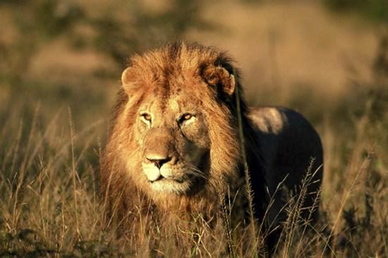 比林斯堡野国家动物保护区