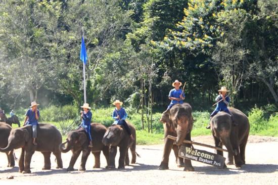 涌邁大象訓練營
