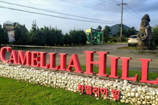 Camelliahill山茶花之丘(賞山茶花)