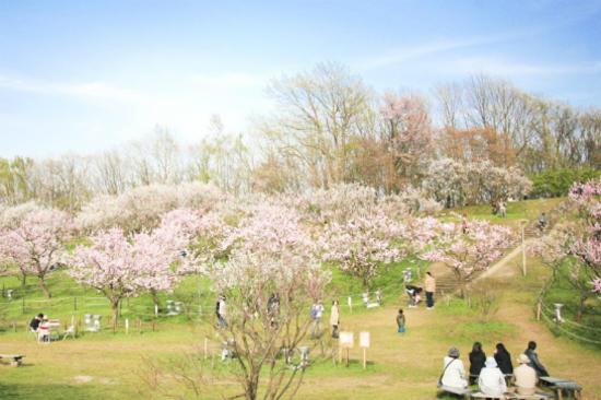 平岡公園梅花祭2