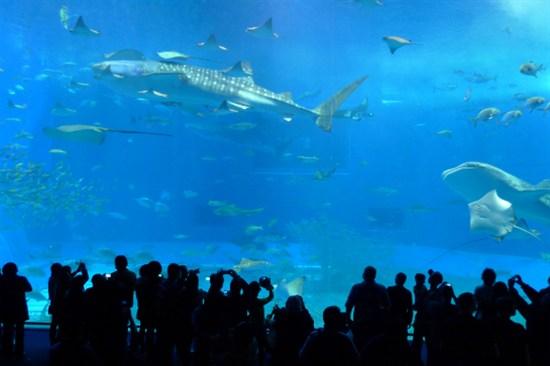 「全球最大水族館之一」海洋博公園