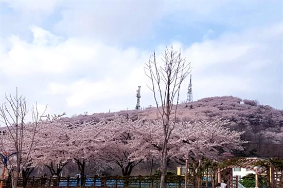 五十川櫻花小路~遠眺鳳凰山