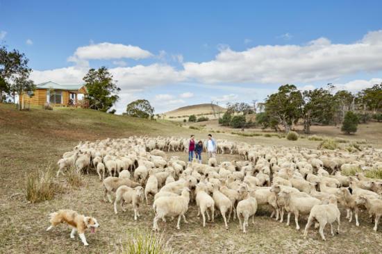 Curringa農場