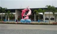 Pattaya Dolphin World(包昂貴入場,觀賞粉紅色海豚表演)