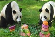 深圳野生動物園