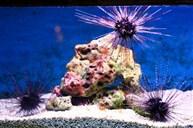 海底世界水族館(包入場)