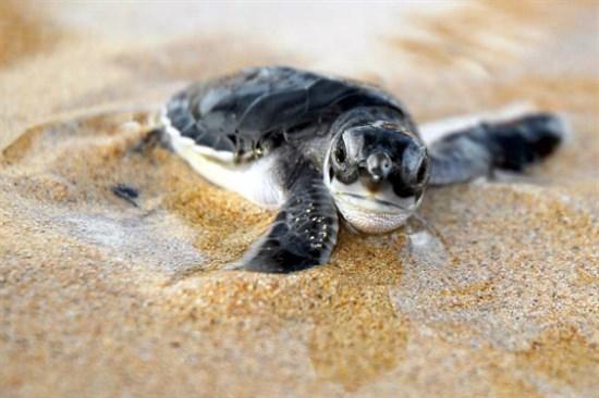 瀕臨海龜保育中心