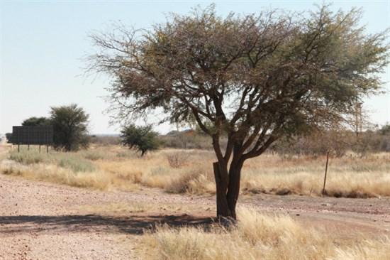 卡拉哈里沙漠盆地