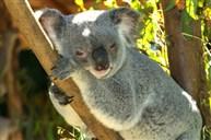 悉尼室內野生動物園
