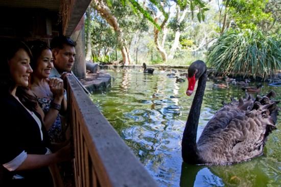 塔龍加動物園