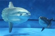 「關東最大規模水族館」Oarai Aqua World