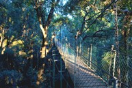 O'Reilly's 樹頂吊橋