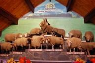 愛歌頓牧羊場