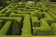 樹籬迷宮及薰衣草園