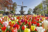 庫肯霍夫公園花卉展覽