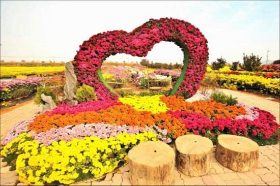 瑞山菊花祝祭(10月28日至11月5日出發團隊適用)