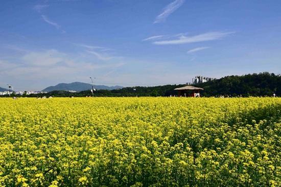 京畿道.九里漢江公園(4月27日至5月12日出發適用)
