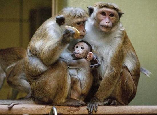 東莞香市動物園