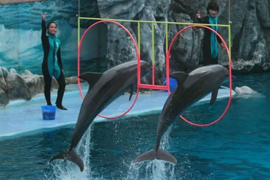 野生動物園海豚表演 dolphin show safariworld