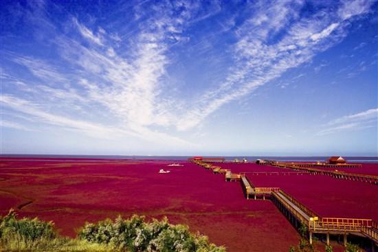 盤錦-紅海灘