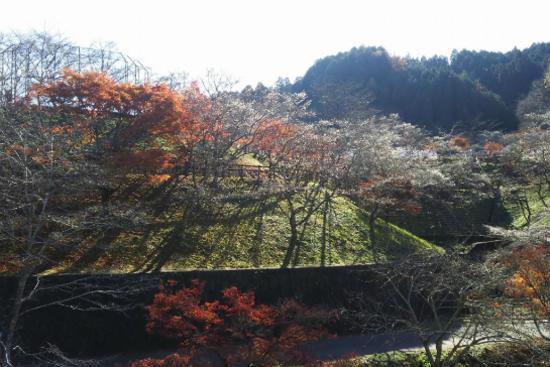 小原四季櫻祭