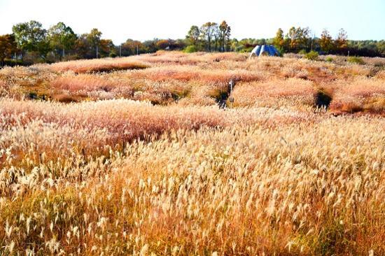 《增遊》漢江天空公園(賞紫芒草)(10月1日至31日出發團隊適用)