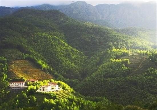 雲頂茶園度假村