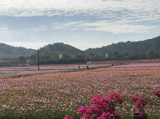 水稻國家公園