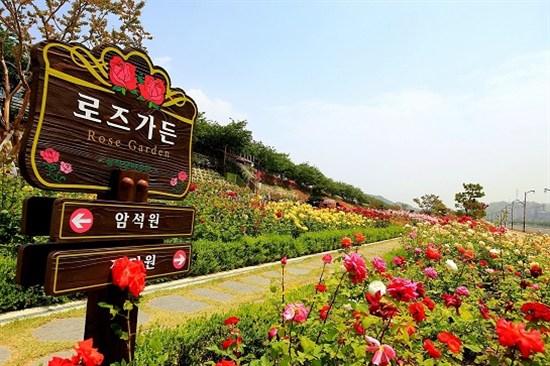 三陟玫瑰公園賞玫瑰花(5月30日至6月30日出發適用)