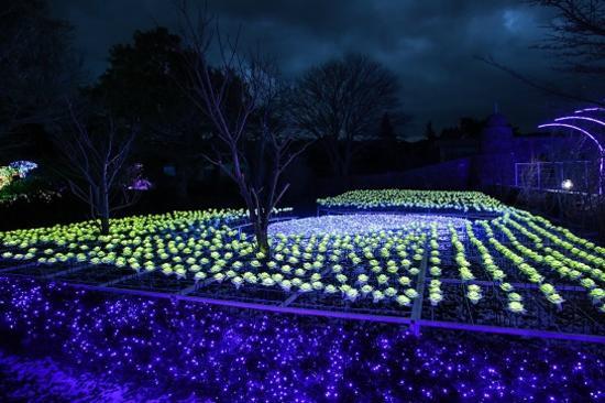 濟州夜燈庭園