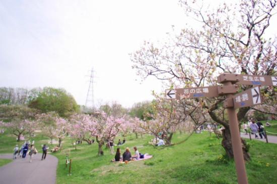 平岡公園梅花祭