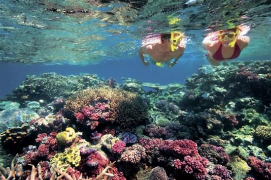 浮潛觀賞珊瑚礁