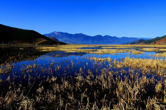 瀘沽湖 - 草海濕地