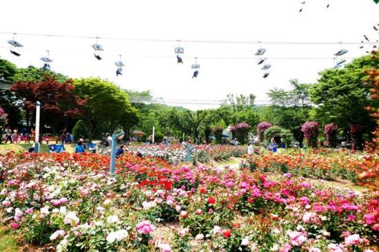 首爾大公園(賞玫瑰花)