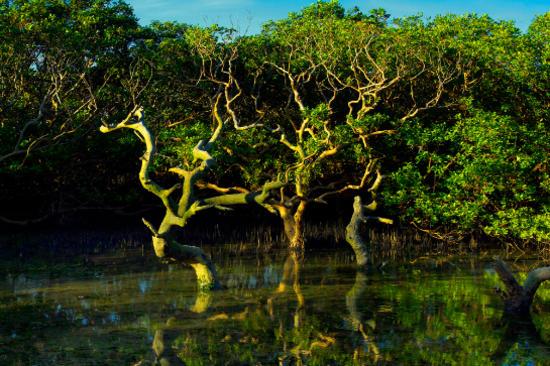 紅樹林生態旅遊景區