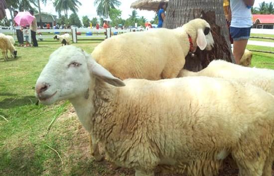 趣緻綿羊公園