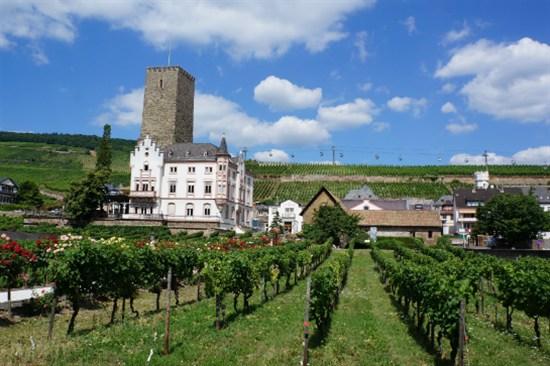符茲堡-葡萄園之旅