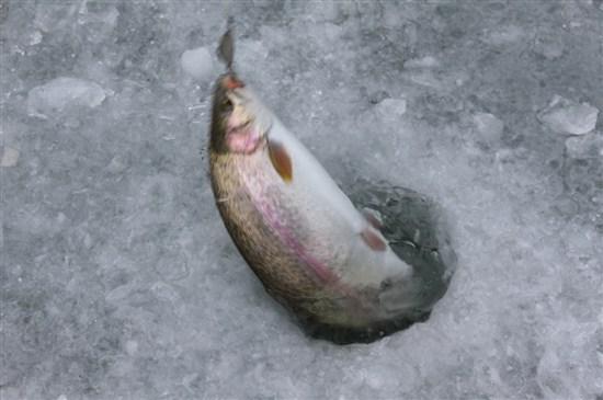 平昌珍富釣山鱒魚(2017年1月1日至16日出發適用)