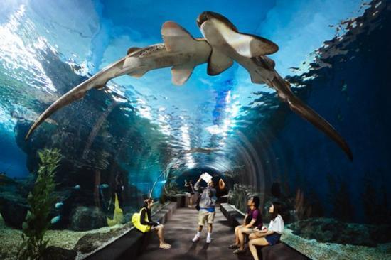 芭堤雅Siam Paragon暹羅海洋世界水族館