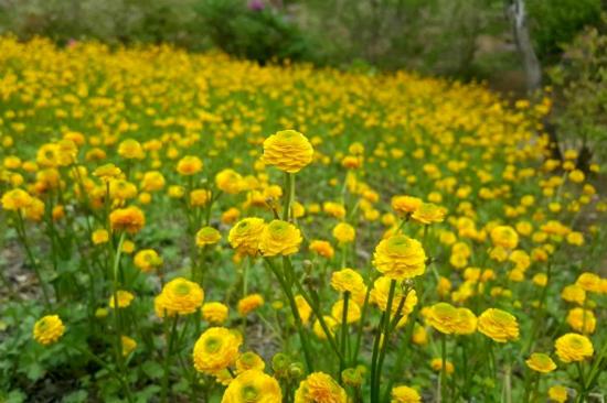 北見Flower Paradise