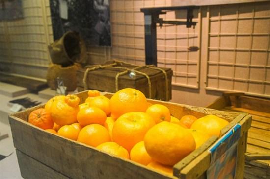 橘子博物館