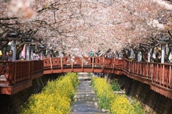 余左川橋(賞櫻花)