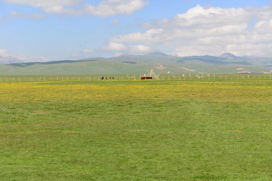 若爾蓋大草原