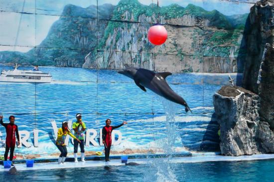 野生動物園海豚表演