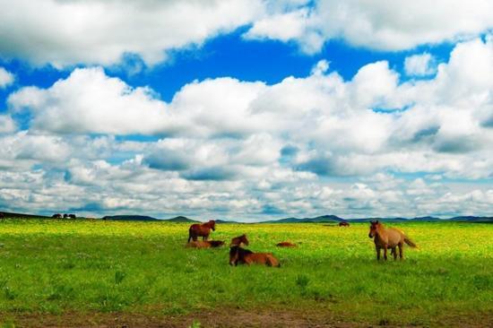 敕勒川草原