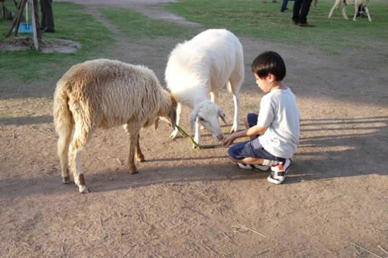 芭堤雅趣緻綿羊樂園