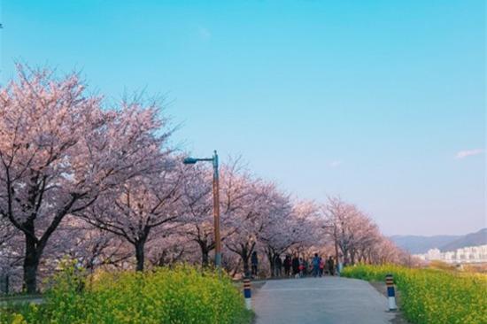 大渚生態公園(賞櫻花)