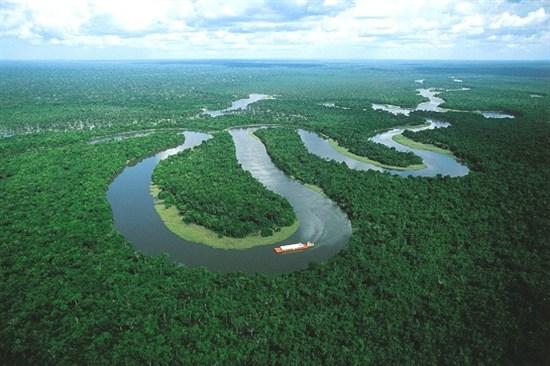 D.亞馬遜雨林