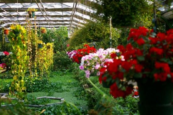 牙山世界花卉植物園