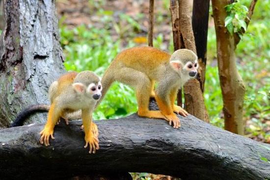 廣州動物園